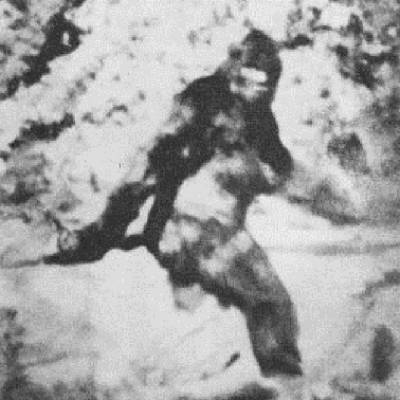 Why We Can't Rule Out Bigfoot