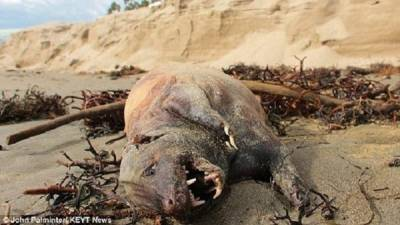 Mysterious creature with sharp claws and pointy teeth discovered on California beach