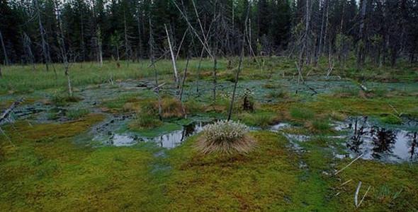 Воспоминания о черепахах-монстрах из реки возмутили костромичей