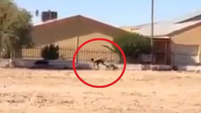 В ЮАР сняли на видео легендарного человека-пса?