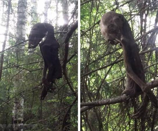 Труп чупакабры нашли туристы под Таганрогом