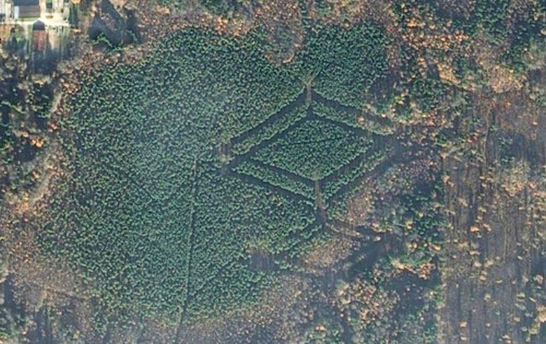 Леса Смоленской области удивили исследователей загадочными символами