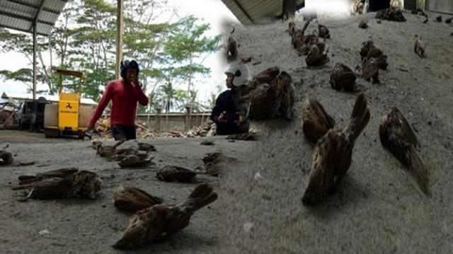 Загадочное явление на Бали: тысячи мертвых птиц падают с неба
