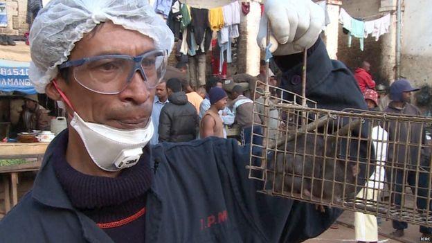 На Мадагаскаре вспышка бубонной чумы. Она грозит распространением на весь мир