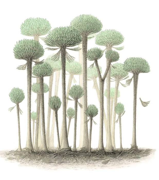 деревья вида кладоксилопсид (cladoxylopsid) достигали 12 метров