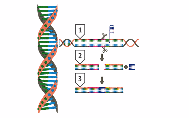 Для борьбы с крысами британские генетики создали крысу-геномутанта (2)