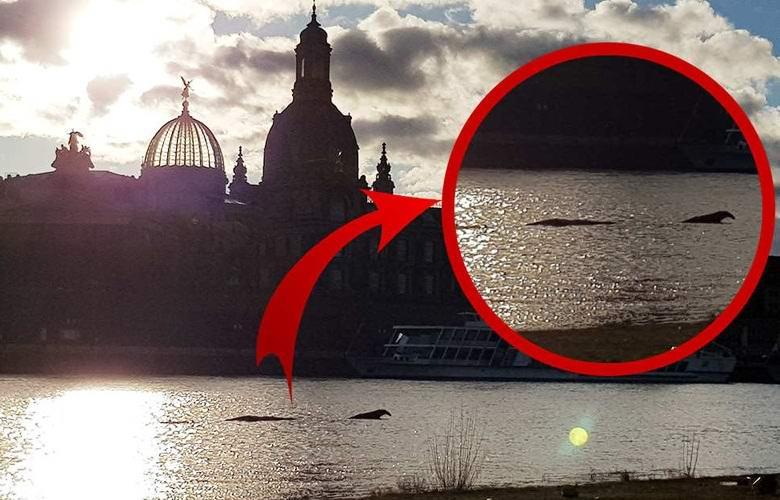 Немец сфотографировал чудище в реке Эльбе