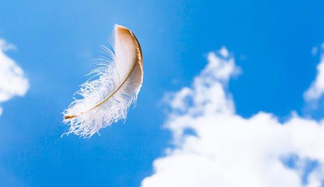 Мертвые могут общаться с живыми при помощи белых перьев