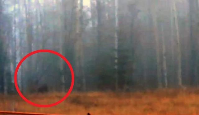 Снежный человек кидал в лесу бревно