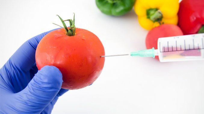ДНК человека поглощает ГМО