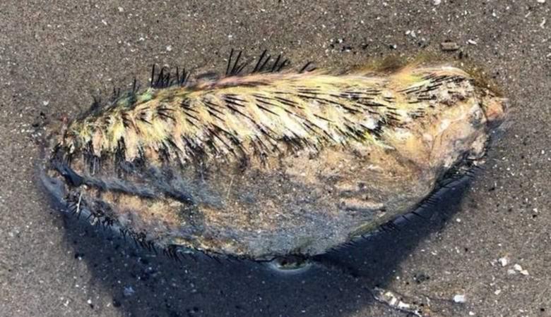Труп непонятного существа обнаружили в Ливерпуле