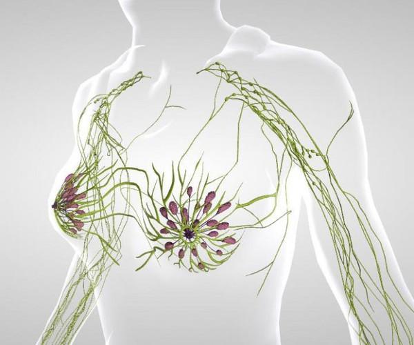 Очищаем лимфосистему — лечение и профилактика