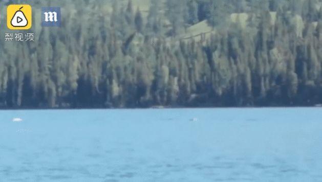 В Китае на видео попало загадочное существо, плавающее в озере