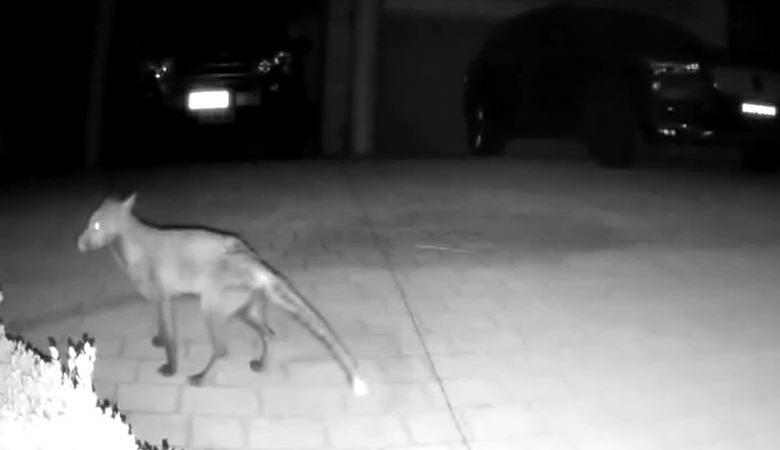 Загадочное существо попало на камеру наблюдения