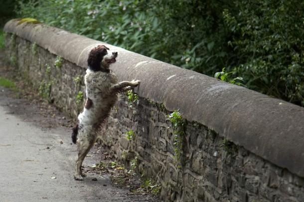 Загадка моста, с которого прыгают собаки. Влияние призраков или проклятие?