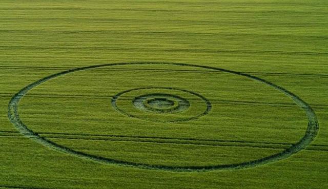 4 рисунка на полях появились в мире за последнее время