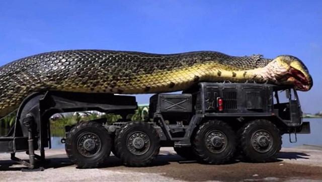 Титанобоа: морской змей весом в тонну