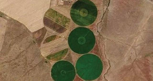 На полях Казахстана замечены гигантские круги зеленого цвета
