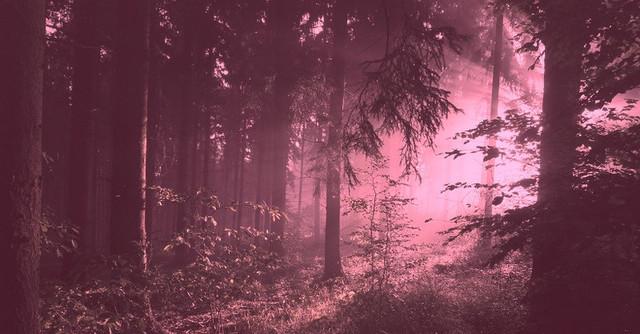 туман, розовый туман