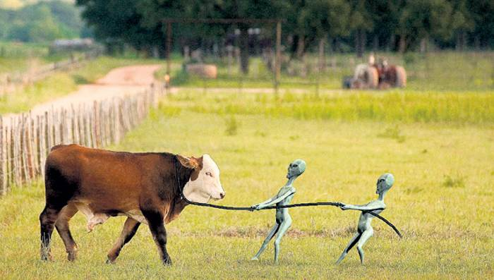 Инопланетяне уничтожили стадо коров в Аргентине