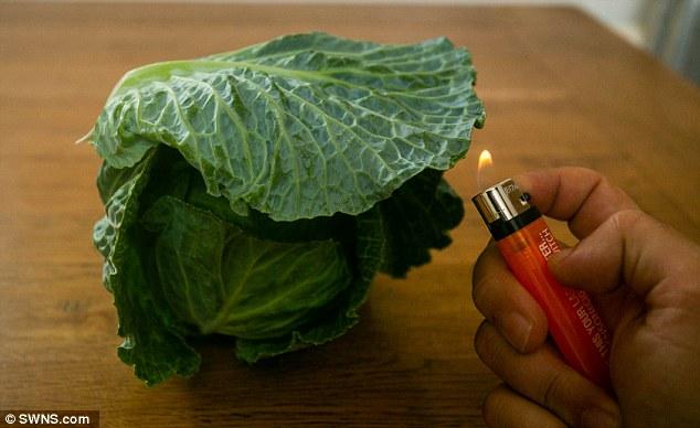 Британцы жалуются на продающуюся в супермаркетах странную «пластиковую» капусту