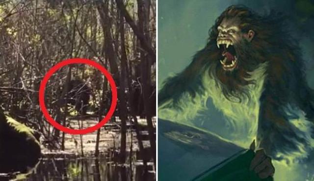 Легендарную скунсовую обезьяну сняли на болотах Флориды