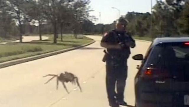Гигантский паук подкрался к полицейскому
