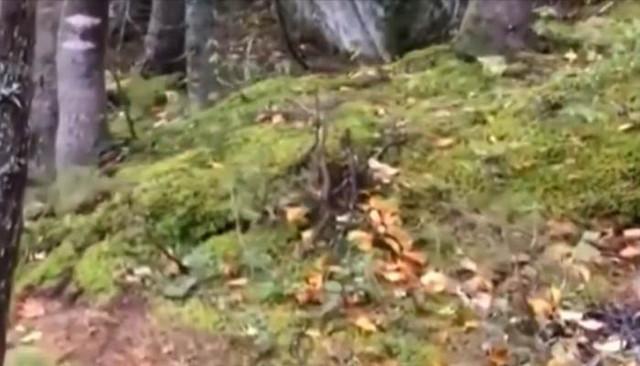 Дыхание земли запечатлели в канадском лесу