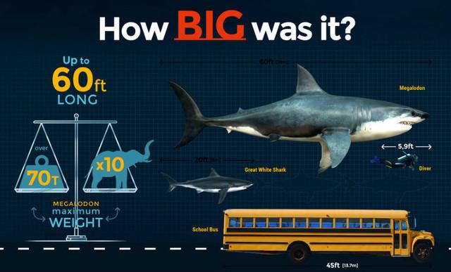 Гигантская акула мегалодон сеяла ужас в мировом океане