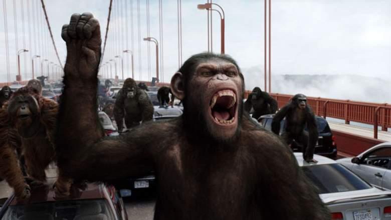 Чудеса науки, обезьяны, макака, эксперимент, генетика