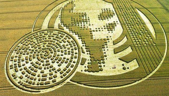 Откуда появляются таинственные круги на полях
