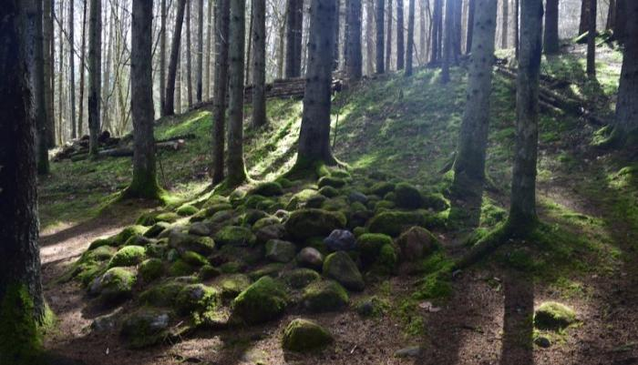 Аномальные Зоны В Лесу Покайни