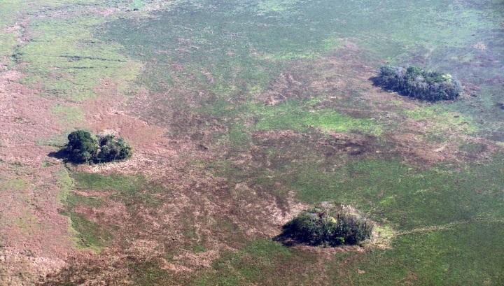 Ландшафт Амазонии оказался рукотворным
