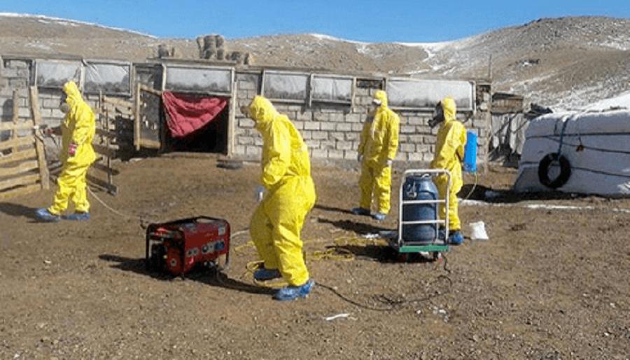 По Монголии расширяется карантин из-за появившейся там бубонной чумы