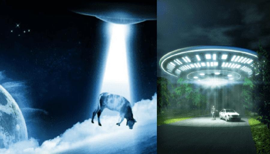 В Орегоне Пришельцы Снова Сожрали Корову Едят Ли Они И Людей