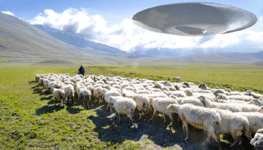 К Чему Готовят Своих Овец Орбитальные Пастыри?