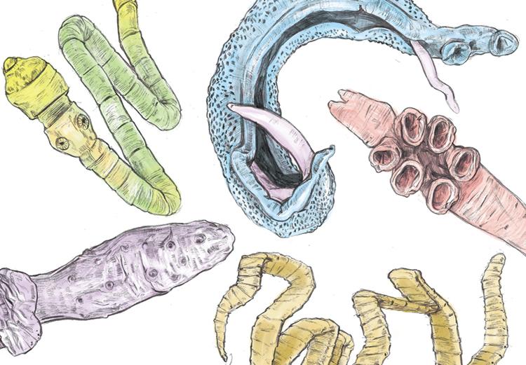 глисты, паразиты, здоровье