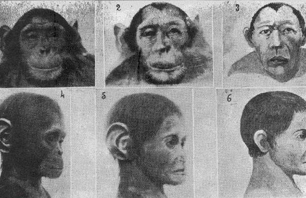 Эксперименты доктора Иванова по созданию гибридов обезьяны и человека