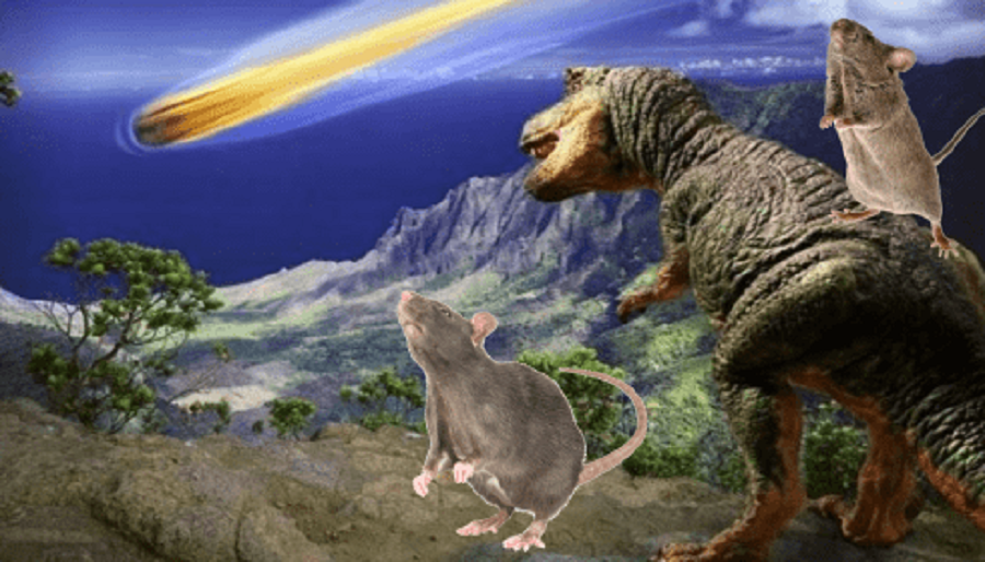 Мыши Австралии готовятся к войне, к Великой Волне или к Апокалипсису?
