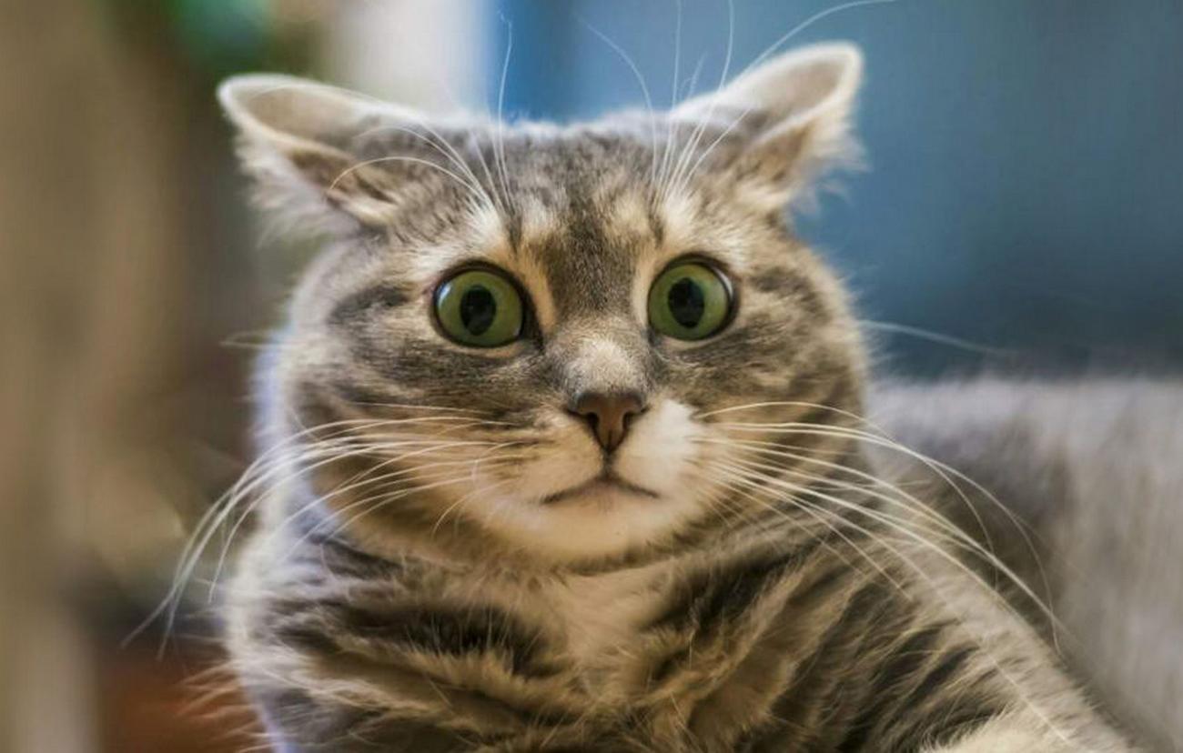 Для кошек и собак может понадобиться новая вакцина от коронавируса