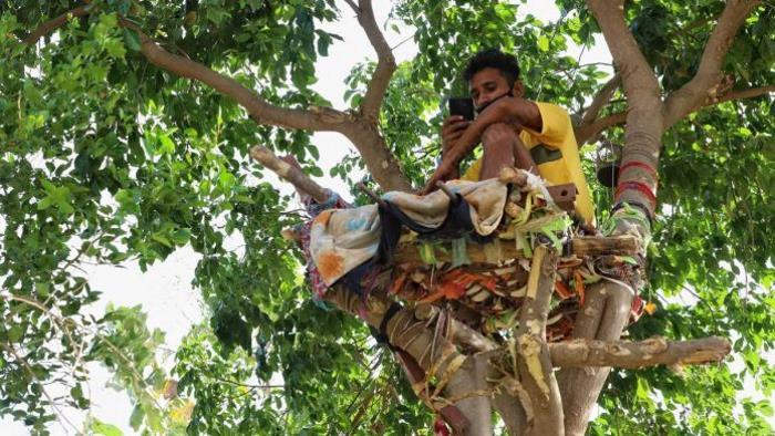 Житель Индии самоизолировался на дереве на 11 дней