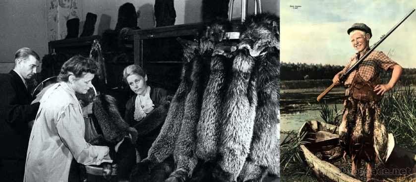 Каких редких животных отстреливали в СССР ради валюты?