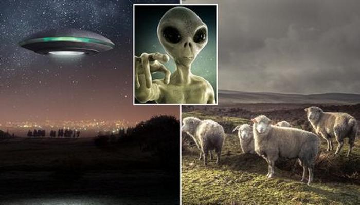Инопланетяне калечат и убивают скот в Великобритании