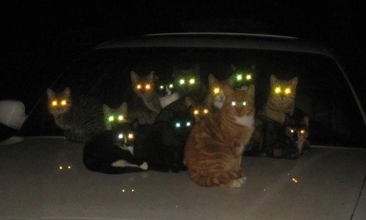 Почему у кошки ночью светятся глаза