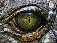 Цивилизация разумных рептилий