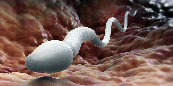 Чем сперма полезна для женжин