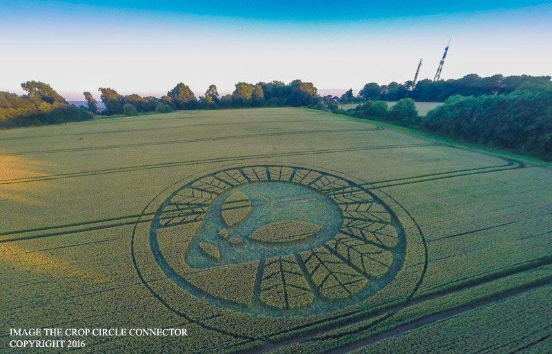 Изображение лица инопланетянина появилось на полях в графстве Суррей, Великобритания