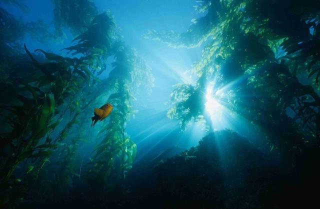 Мировой океан — 10 неразгаданных тайн