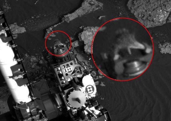 На Марсе нашли аномалию, похожую на живую ящерицу